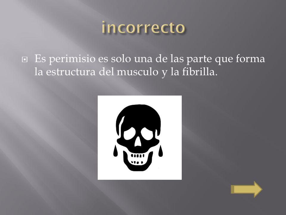 incorrecto Es perimisio es solo una de las parte que forma la estructura del musculo y la fibrilla.
