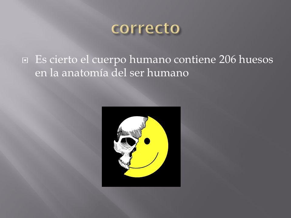 correcto Es cierto el cuerpo humano contiene 206 huesos en la anatomía del ser humano