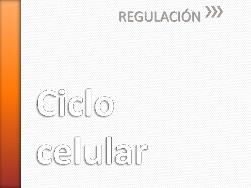 REGULACIÓN Ciclo celular
