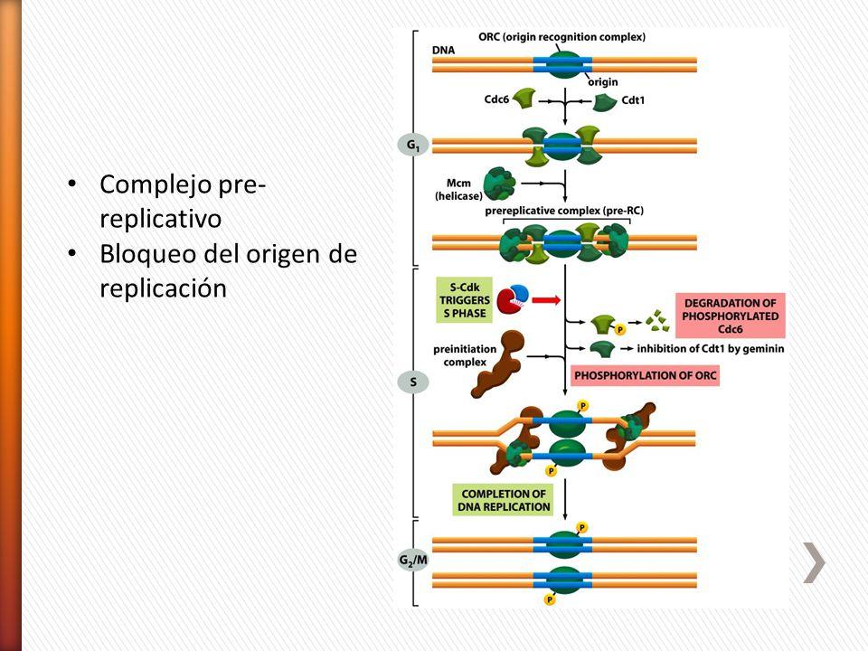 Complejo pre-replicativo