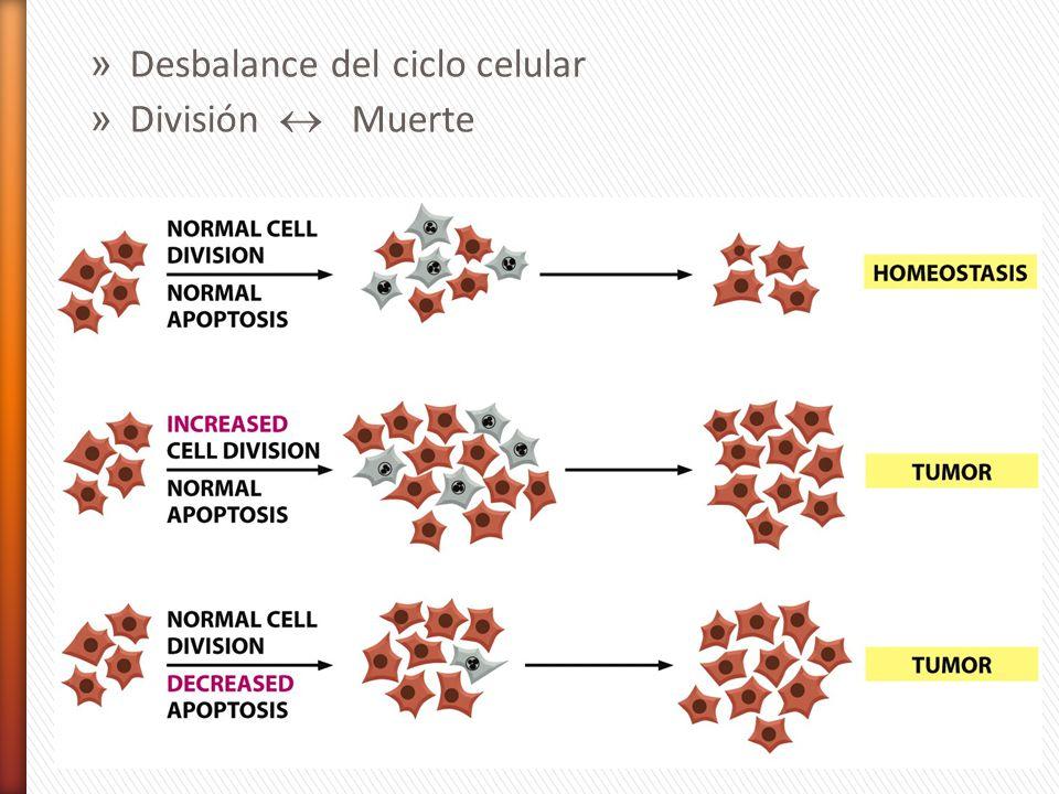 Desbalance del ciclo celular
