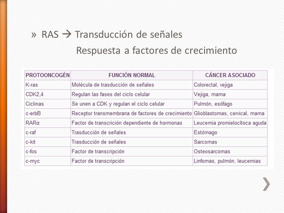 RAS  Transducción de señales