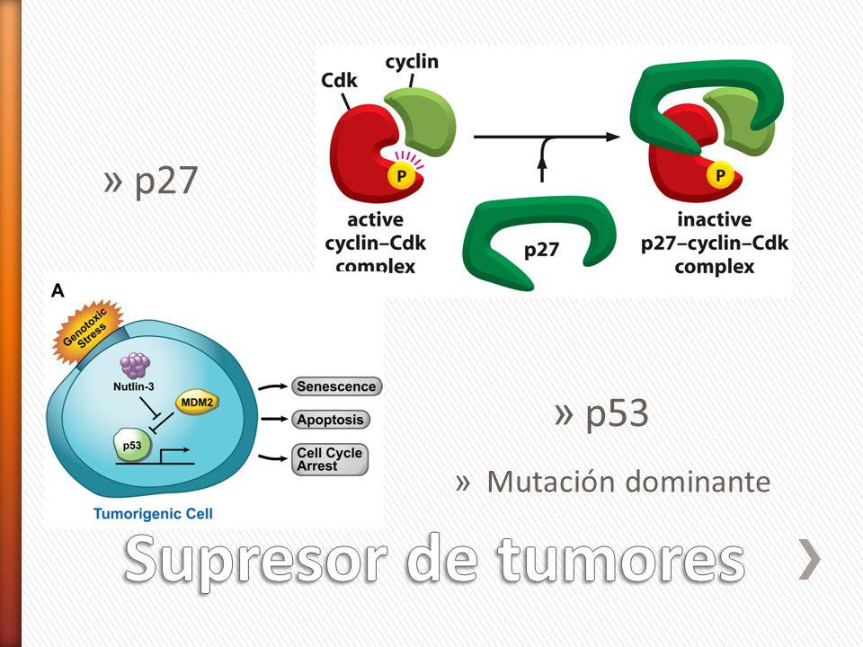 p27 p53 Mutación dominante Supresor de tumores