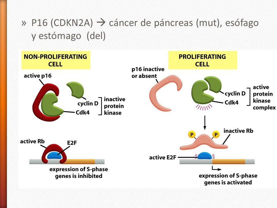 P16 (CDKN2A)  cáncer de páncreas (mut), esófago y estómago (del)