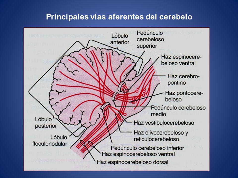 Principales vías aferentes del cerebelo