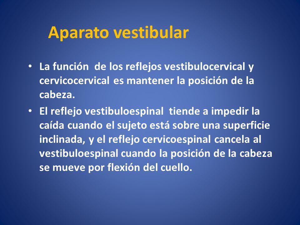 Aparato vestibular La función de los reflejos vestibulocervical y cervicocervical es mantener la posición de la cabeza.