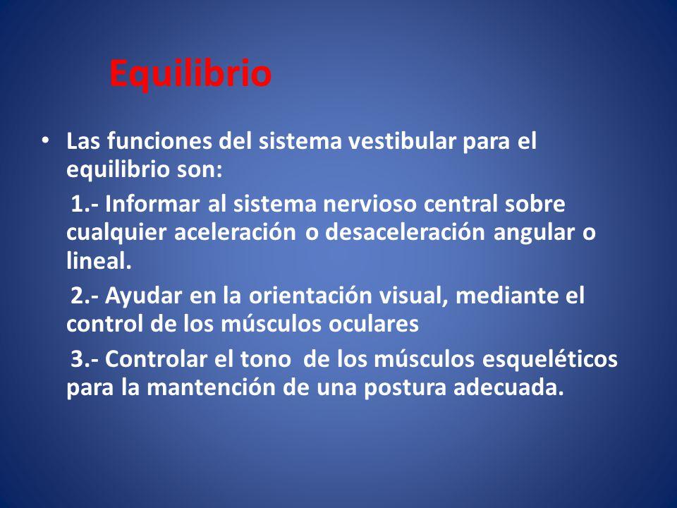 Equilibrio Las funciones del sistema vestibular para el equilibrio son: