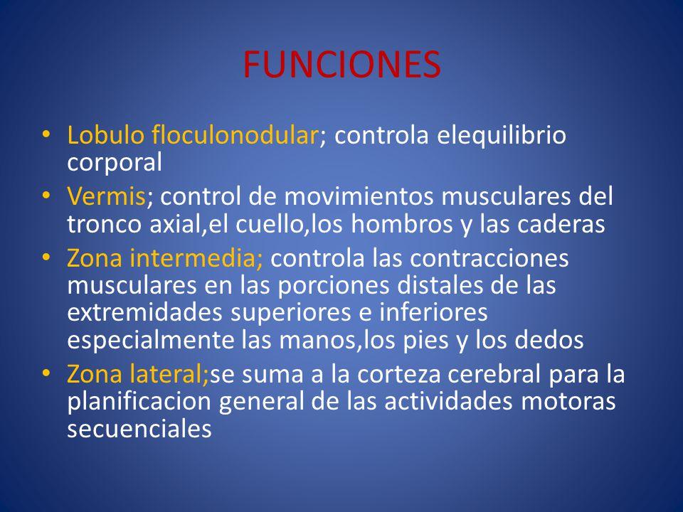 FUNCIONES Lobulo floculonodular; controla elequilibrio corporal