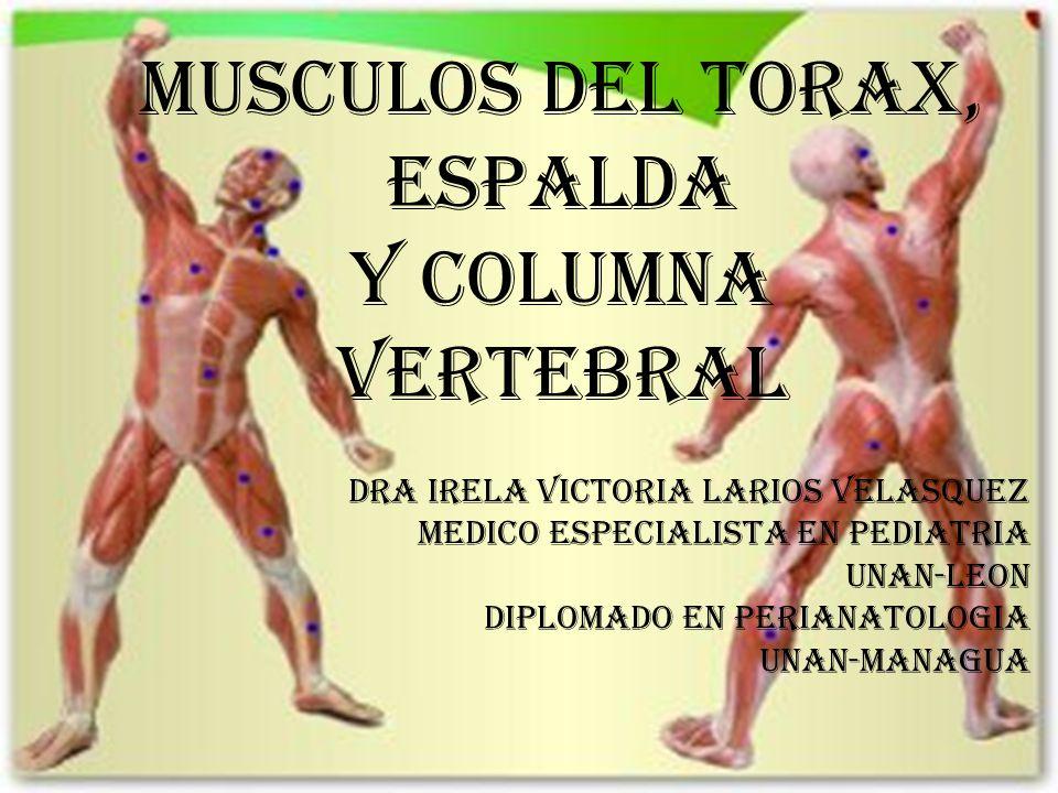 MUSCULOS DEL TORAX, ESPALDA