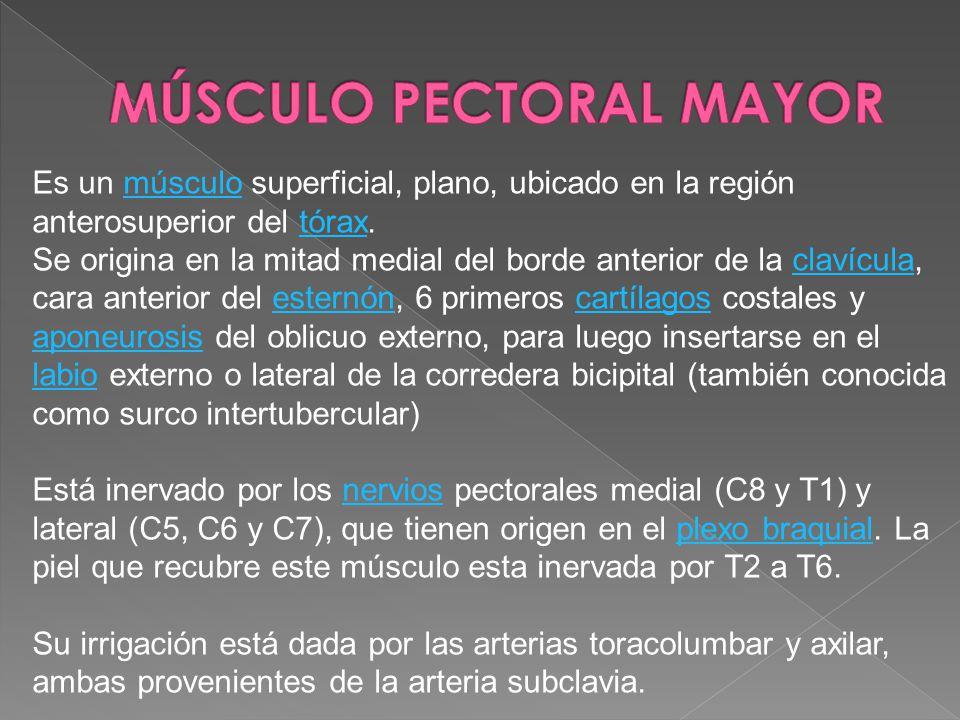 MÚSCULO PECTORAL MAYOR