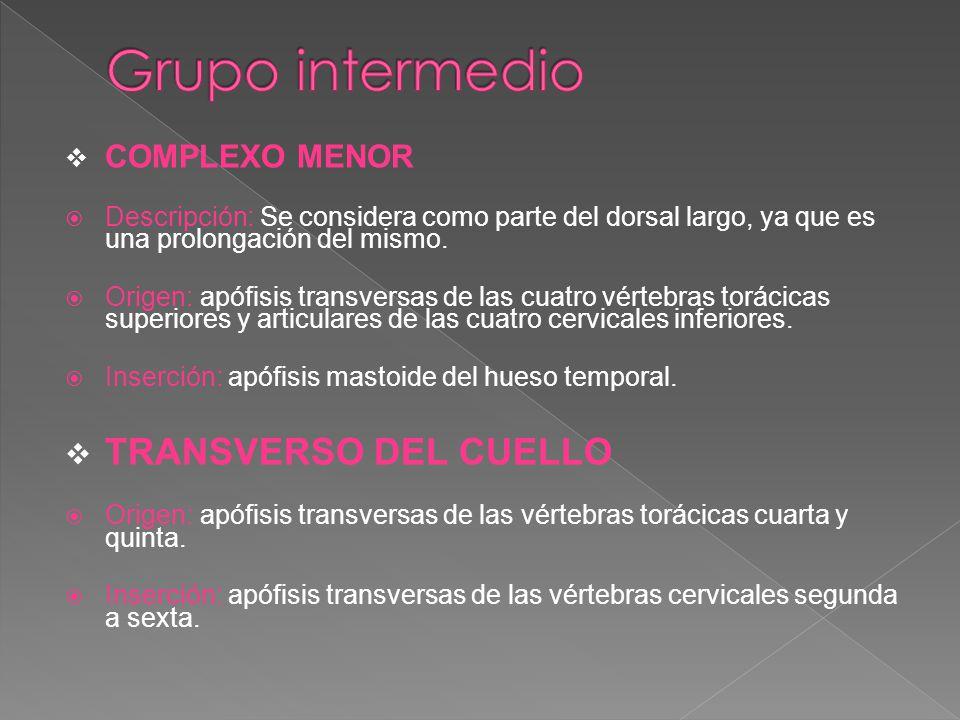 Grupo intermedio TRANSVERSO DEL CUELLO COMPLEXO MENOR