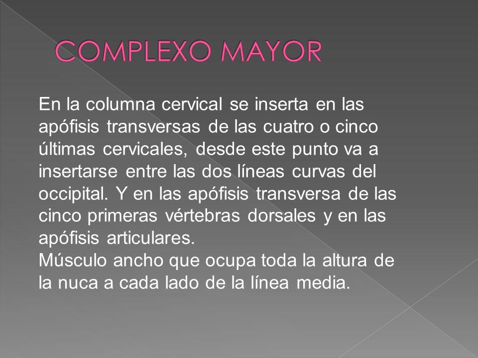 COMPLEXO MAYOR