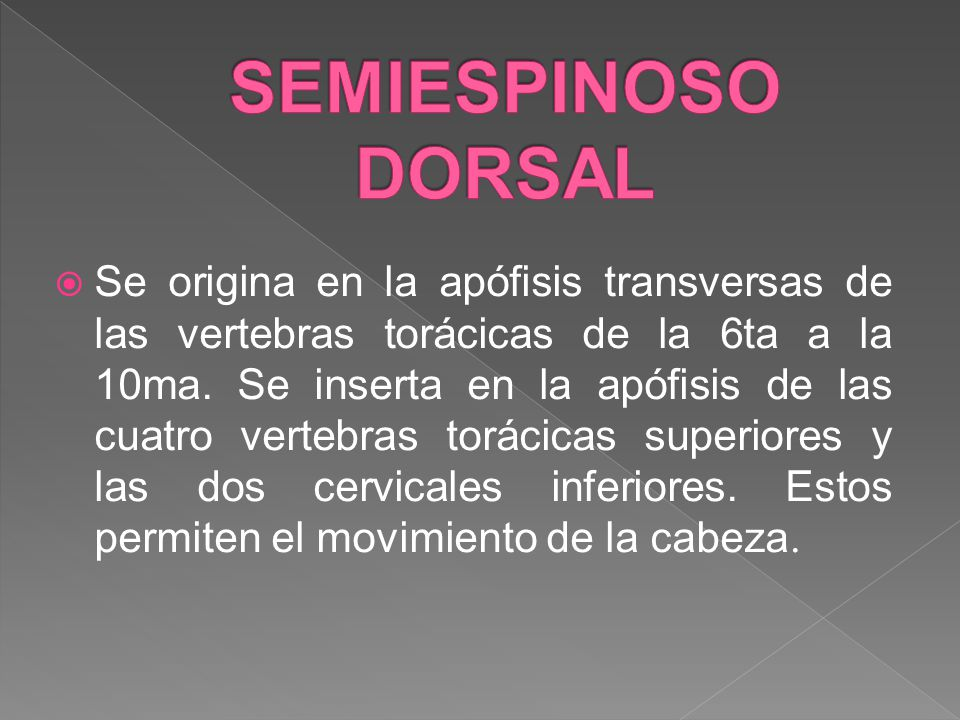 SEMIESPINOSO DORSAL