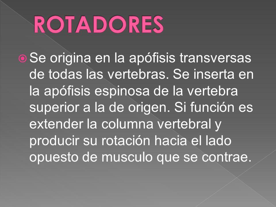 ROTADORES
