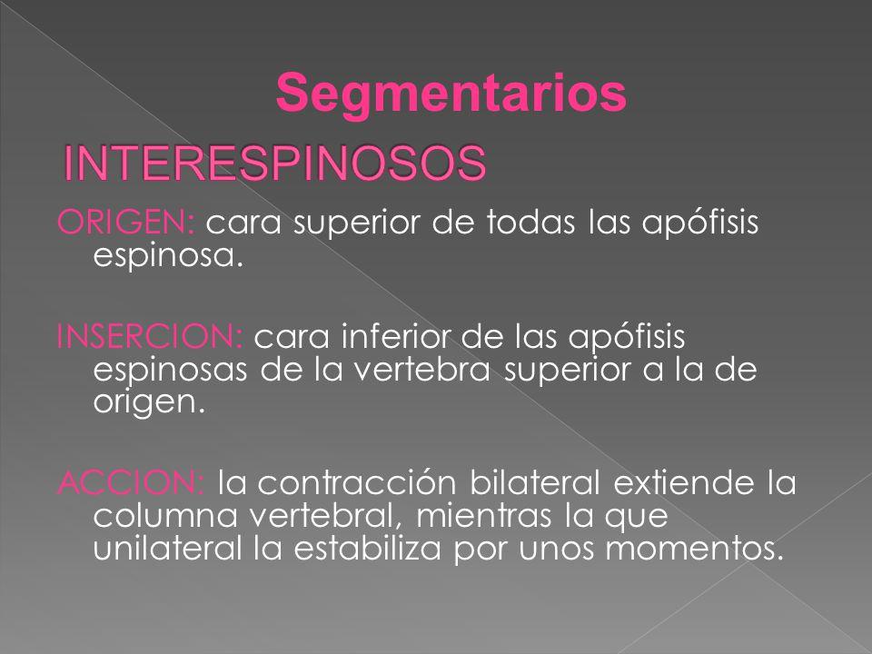 Segmentarios INTERESPINOSOS