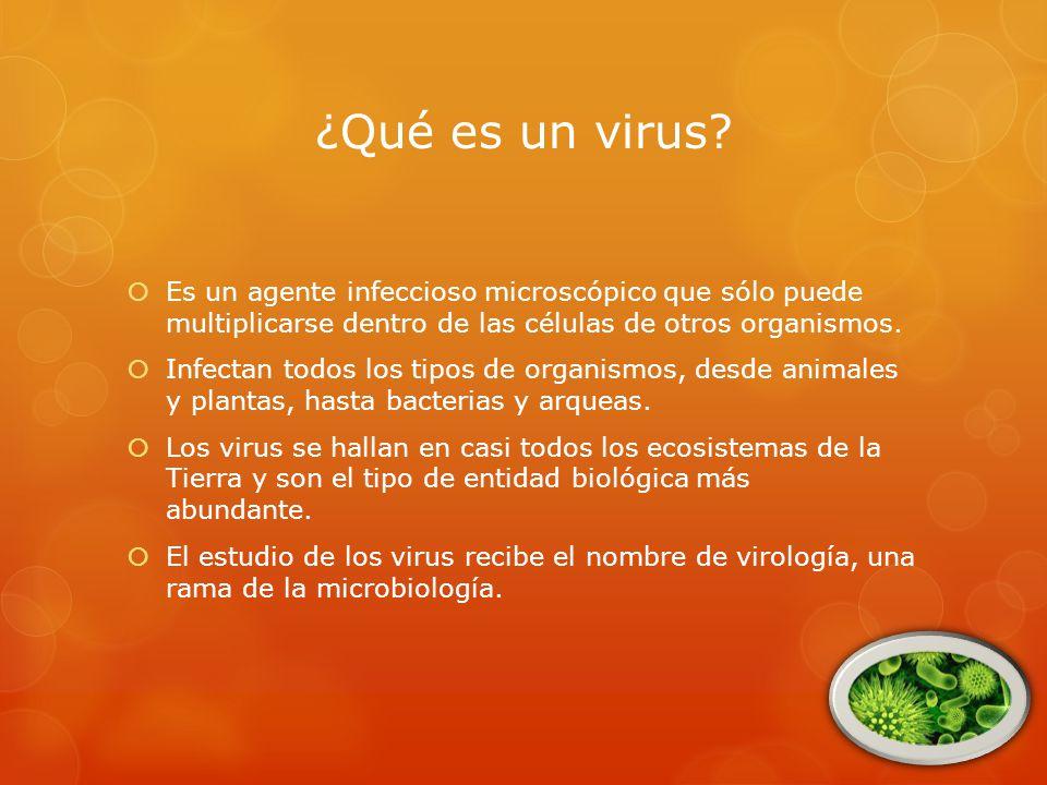 ¿Qué es un virus Es un agente infeccioso microscópico que sólo puede multiplicarse dentro de las células de otros organismos.