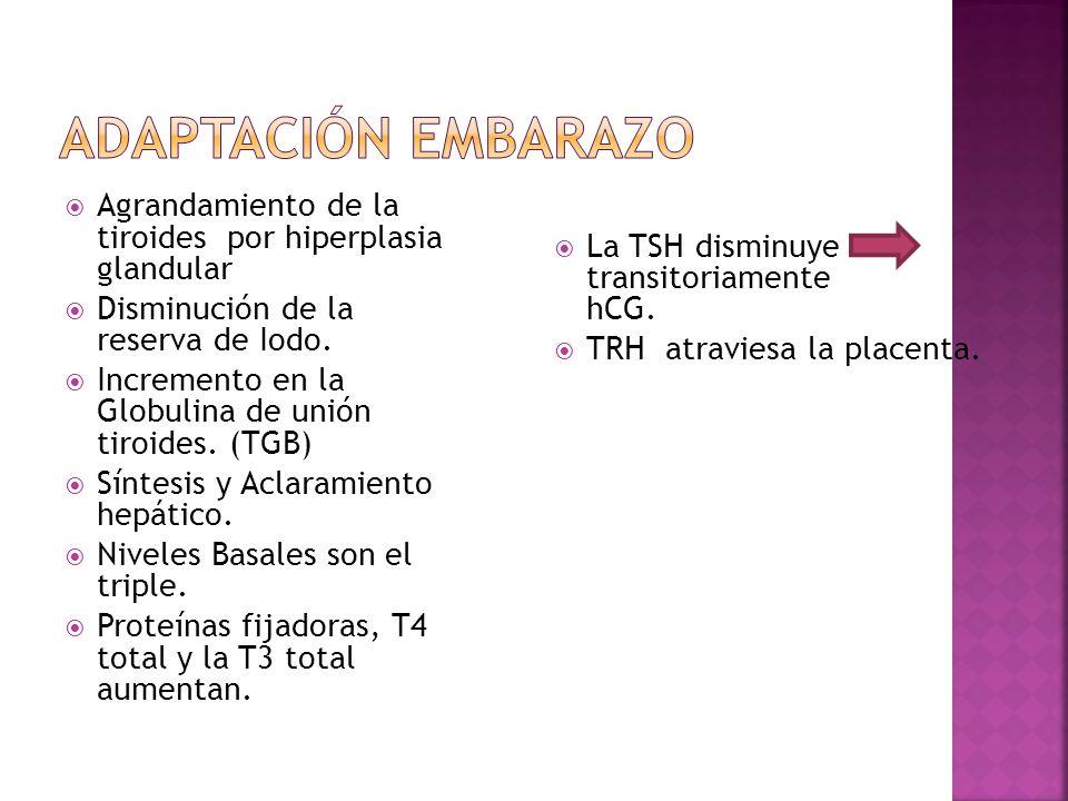 Adaptación Embarazo Agrandamiento de la tiroides por hiperplasia glandular. Disminución de la reserva de Iodo.