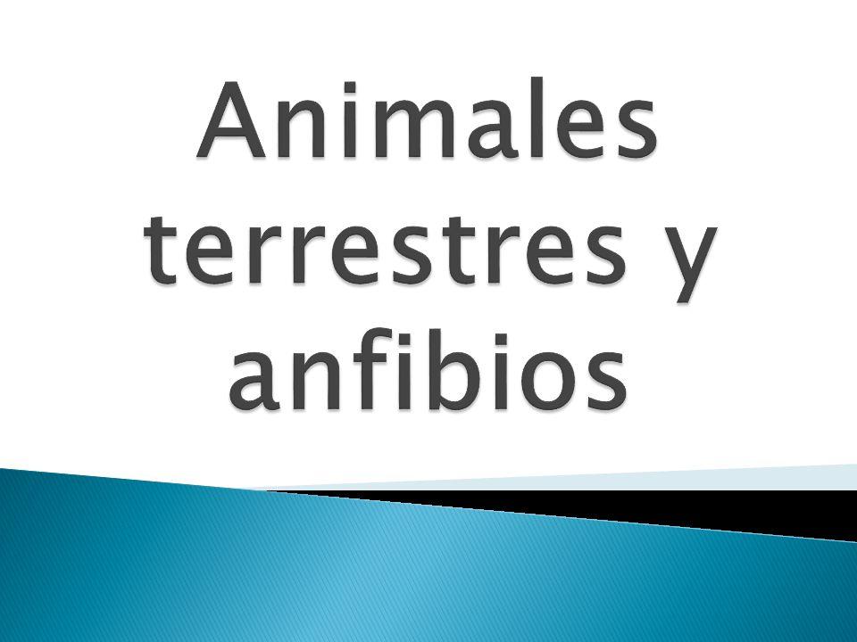 Animales terrestres y anfibios