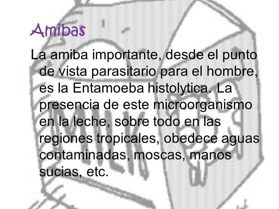 Amibas