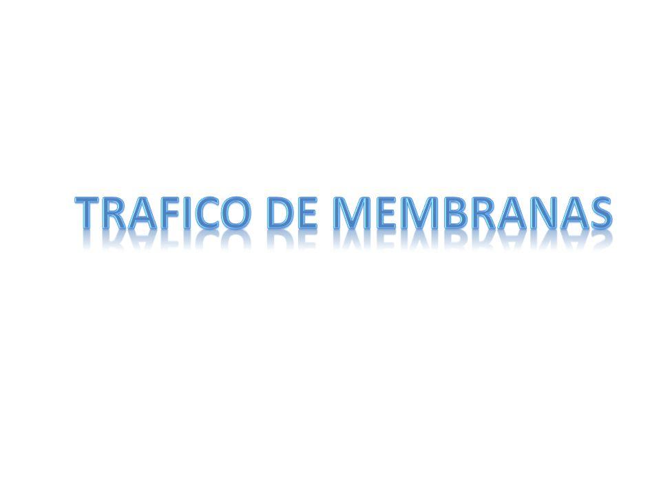 TRAFICO DE MEMBRANAS