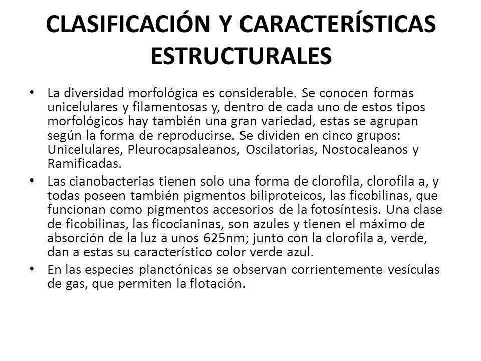 CLASIFICACIÓN Y CARACTERÍSTICAS ESTRUCTURALES