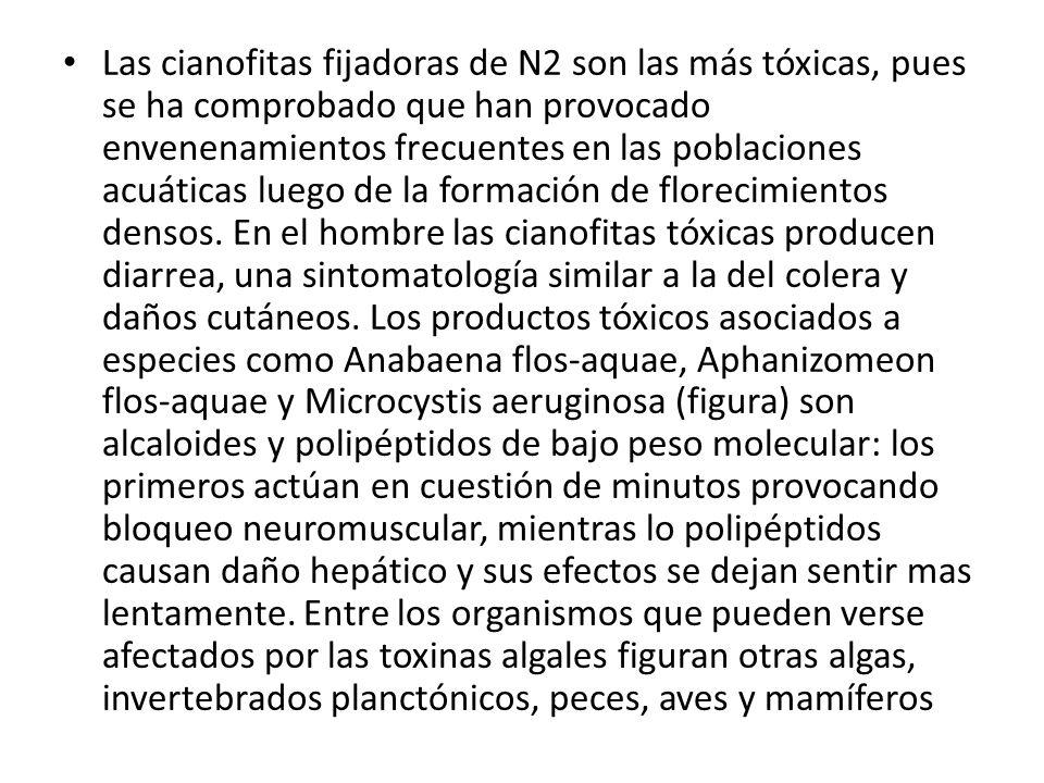 Las cianofitas fijadoras de N2 son las más tóxicas, pues se ha comprobado que han provocado envenenamientos frecuentes en las poblaciones acuáticas luego de la formación de florecimientos densos.