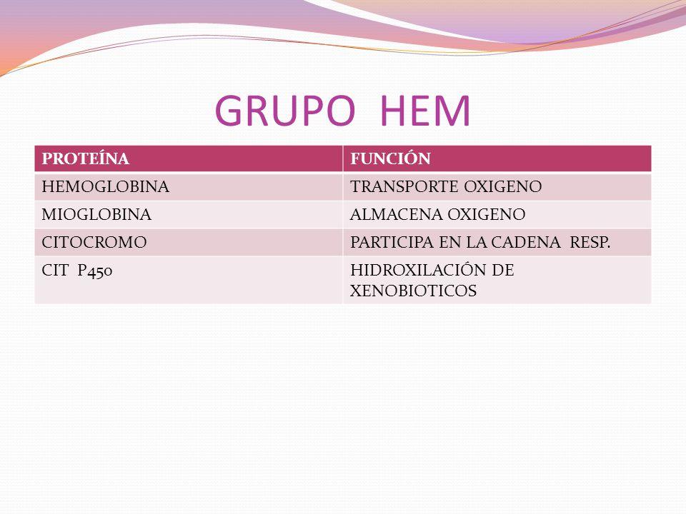 GRUPO HEM PROTEÍNA FUNCIÓN HEMOGLOBINA TRANSPORTE OXIGENO MIOGLOBINA