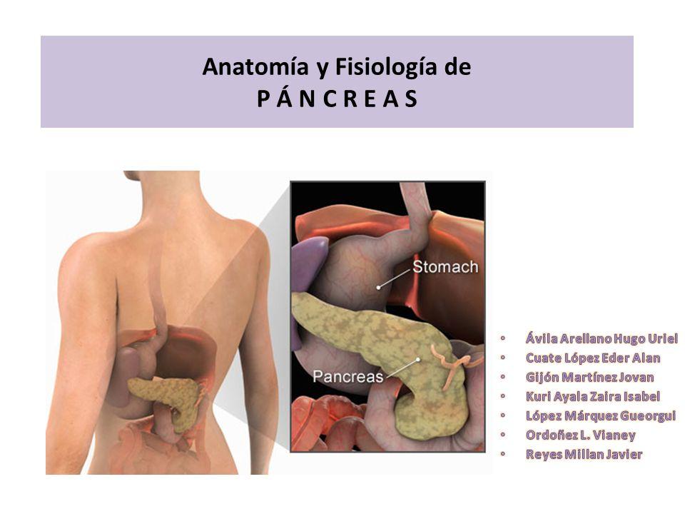 Anatomía y Fisiología de