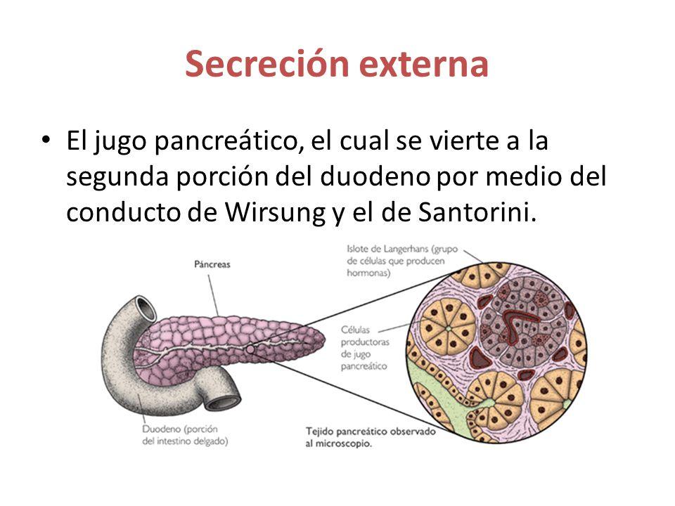 Secreción externa El jugo pancreático, el cual se vierte a la segunda porción del duodeno por medio del conducto de Wirsung y el de Santorini.