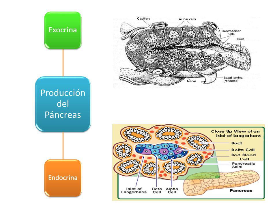 Producción del Páncreas