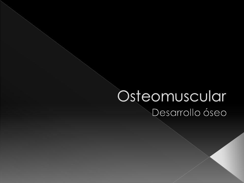 Osteomuscular Desarrollo óseo