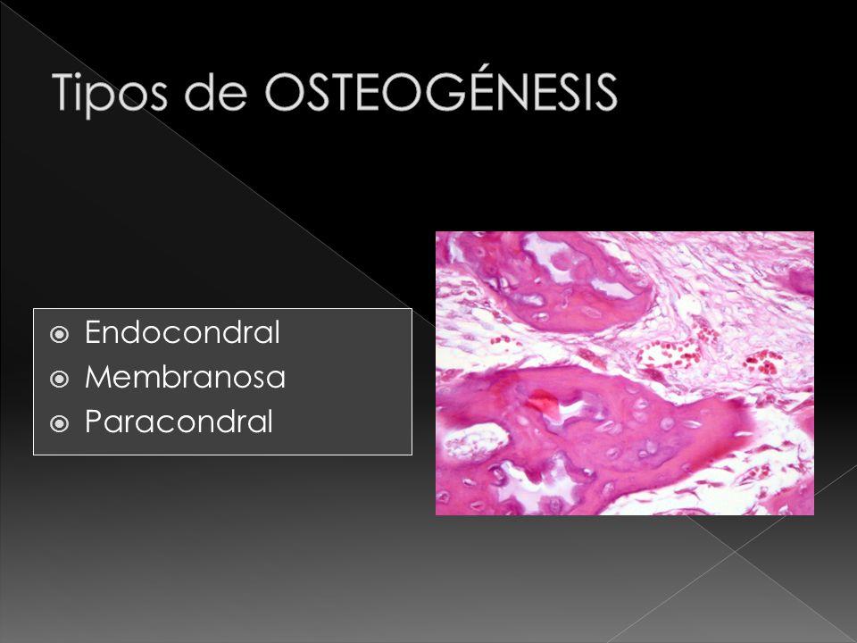 Tipos de OSTEOGÉNESIS Endocondral Membranosa Paracondral
