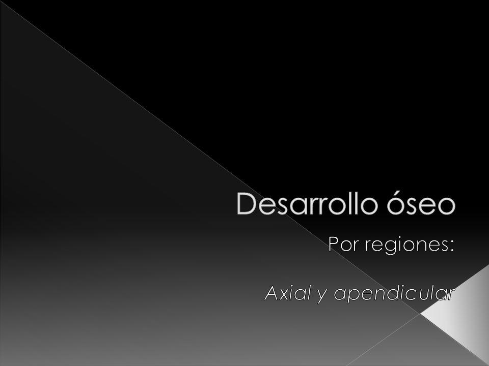 Por regiones: Axial y apendicular