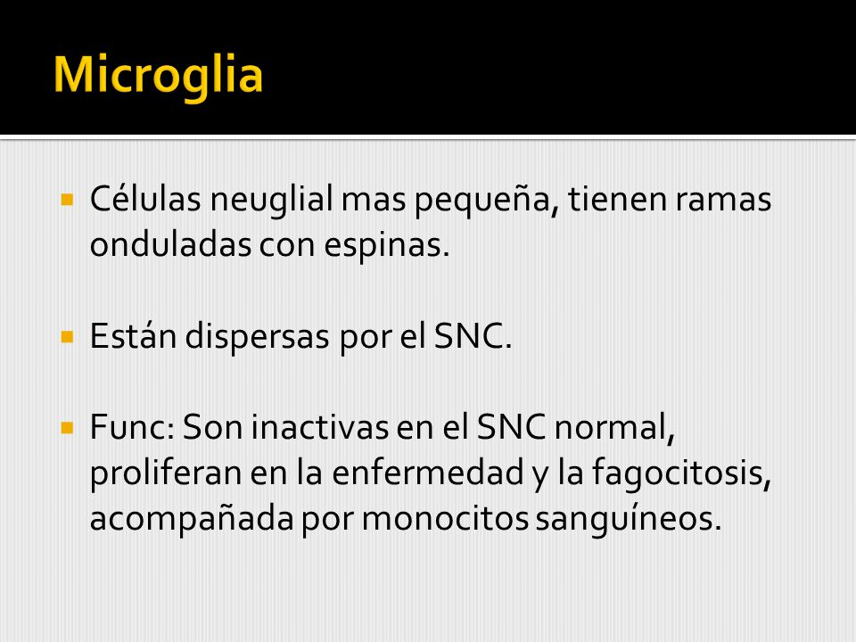 Microglia Células neuglial mas pequeña, tienen ramas onduladas con espinas. Están dispersas por el SNC.