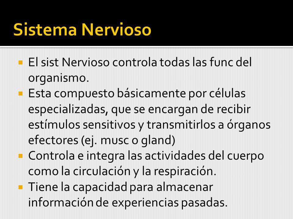 Sistema Nervioso El sist Nervioso controla todas las func del organismo.