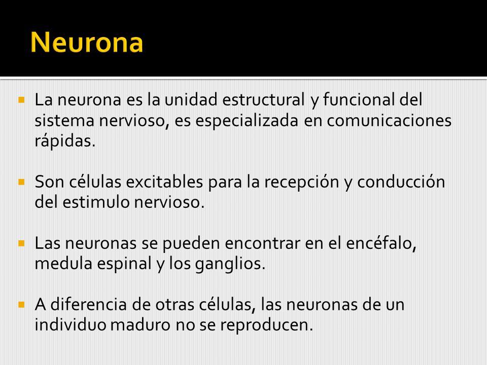 Neurona La neurona es la unidad estructural y funcional del sistema nervioso, es especializada en comunicaciones rápidas.