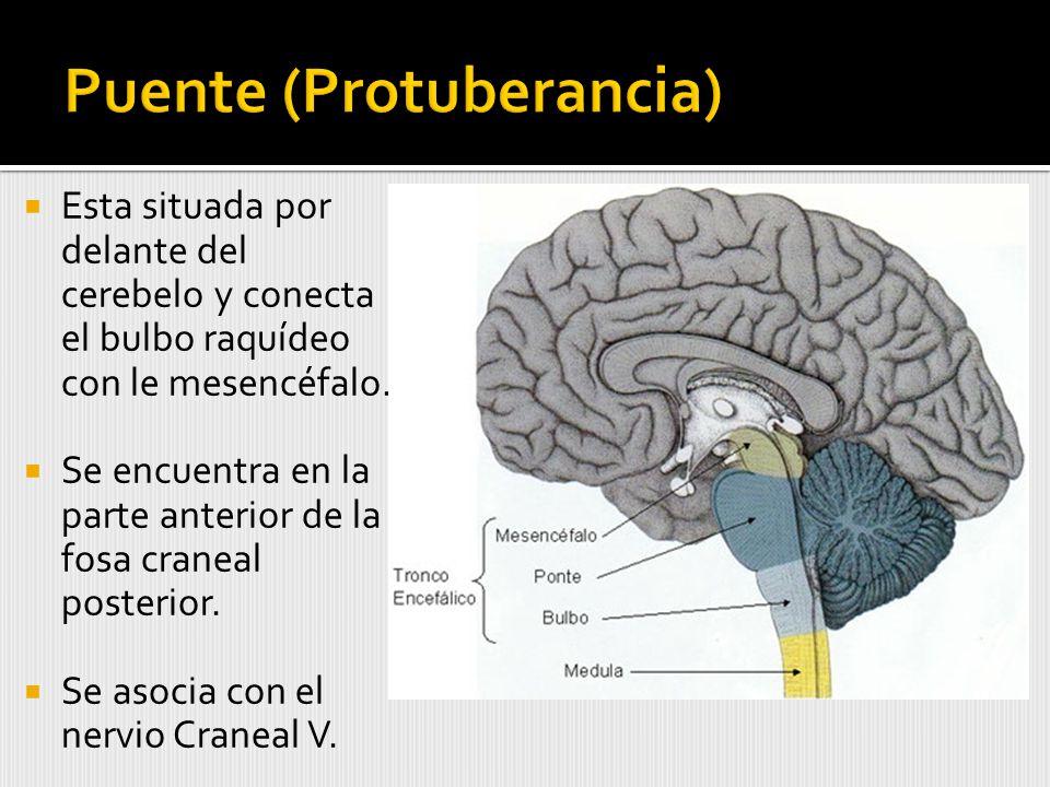Puente (Protuberancia)