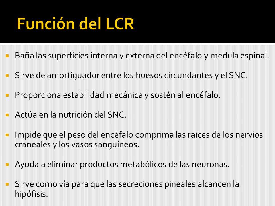 Función del LCR Baña las superficies interna y externa del encéfalo y medula espinal. Sirve de amortiguador entre los huesos circundantes y el SNC.