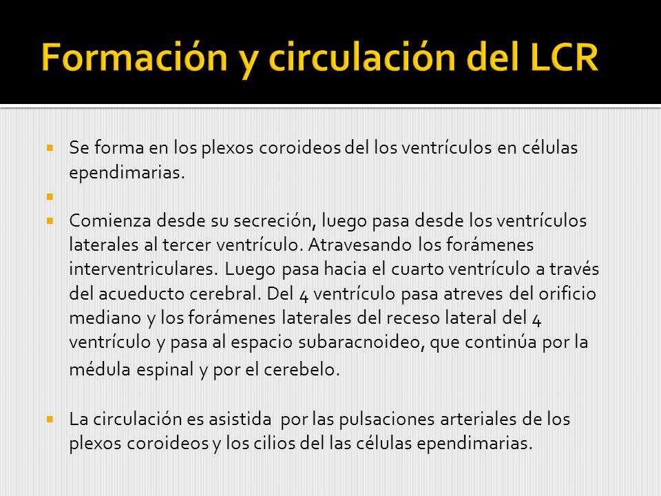 Formación y circulación del LCR