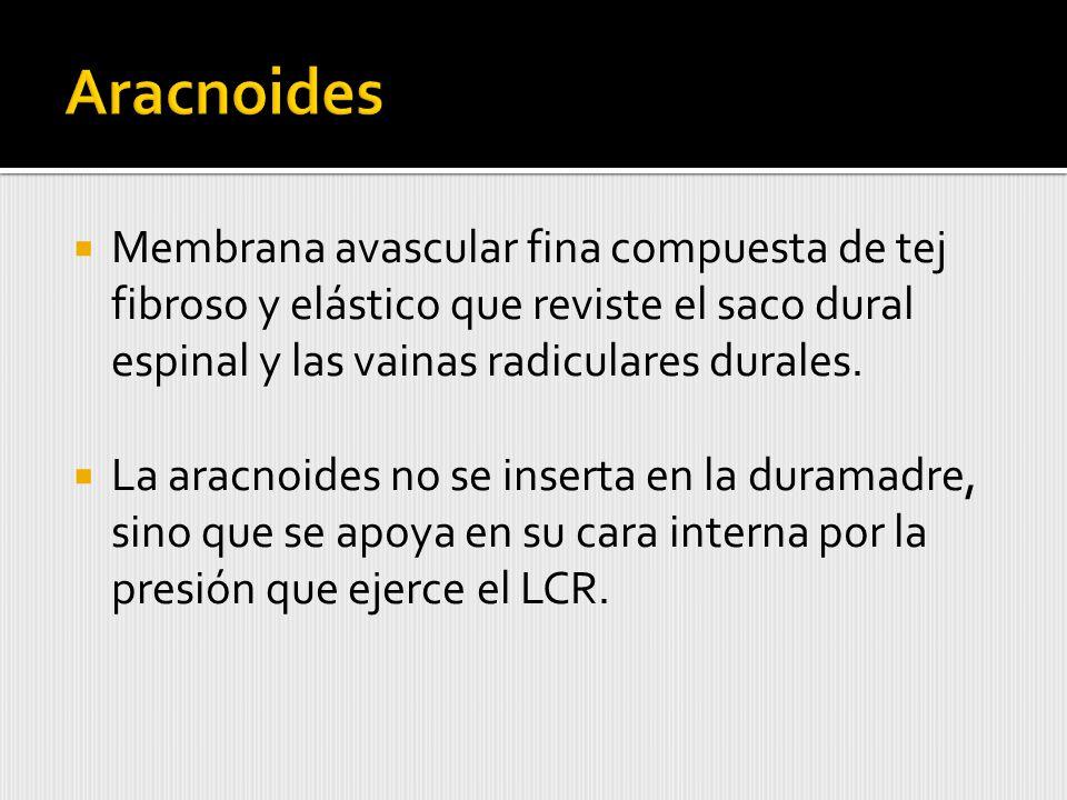 Aracnoides Membrana avascular fina compuesta de tej fibroso y elástico que reviste el saco dural espinal y las vainas radiculares durales.