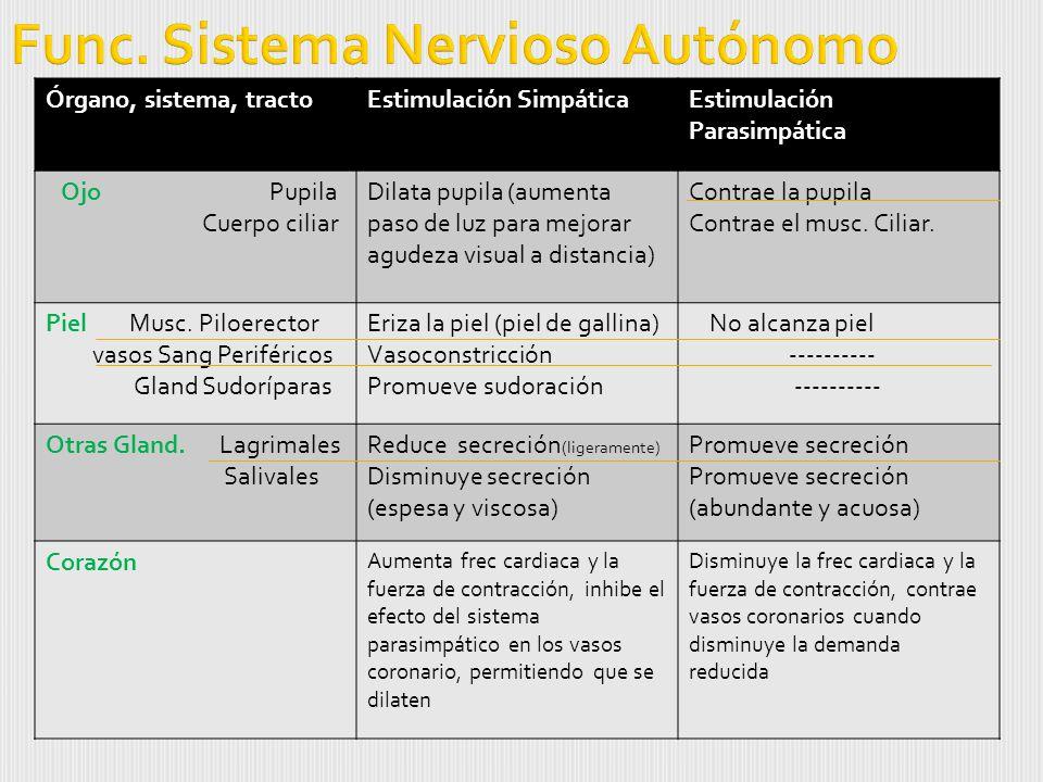 Func. Sistema Nervioso Autónomo