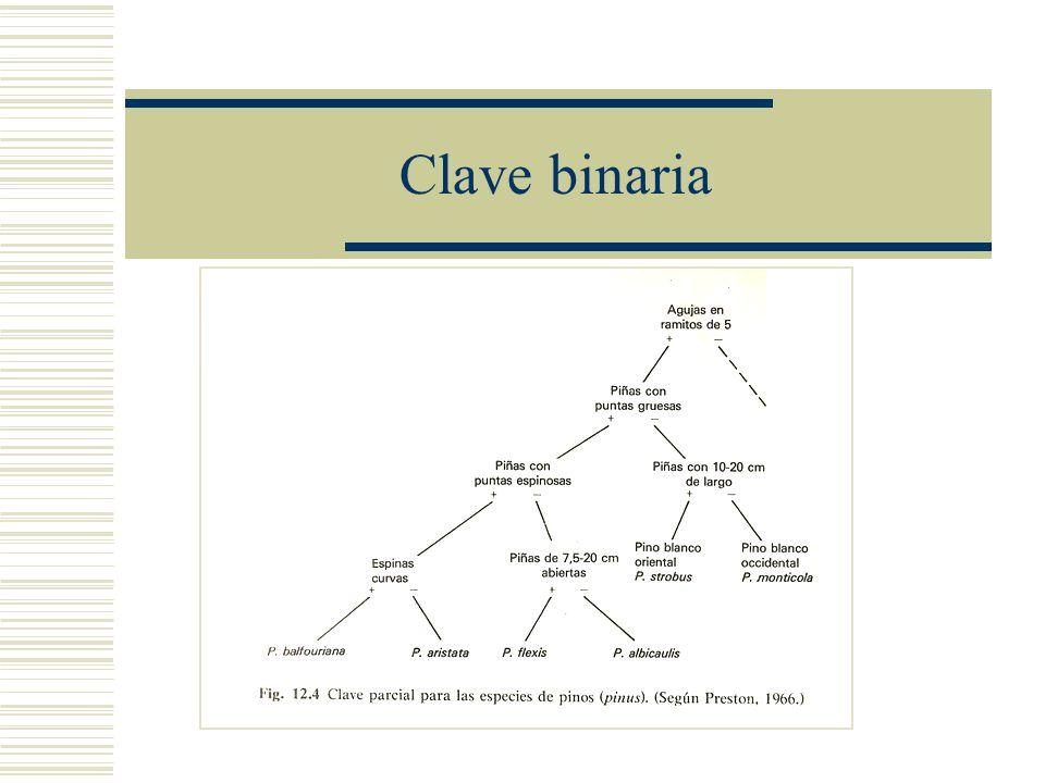 Clave binaria