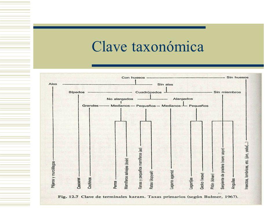 Clave taxonómica