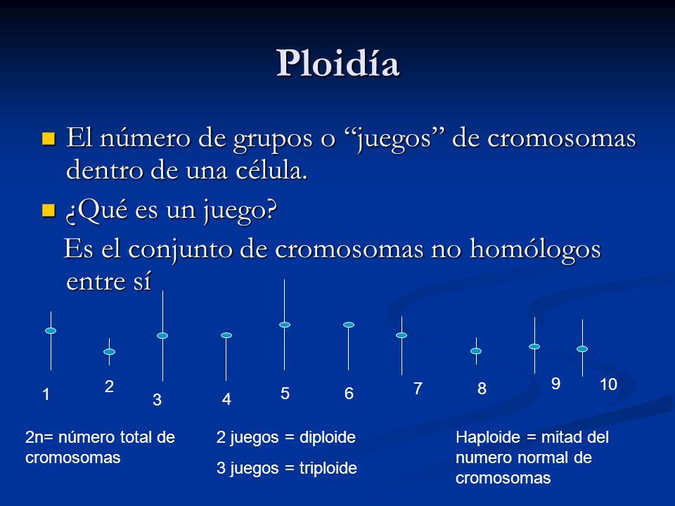 Ploidía El número de grupos o juegos de cromosomas dentro de una célula. ¿Qué es un juego Es el conjunto de cromosomas no homólogos entre sí.