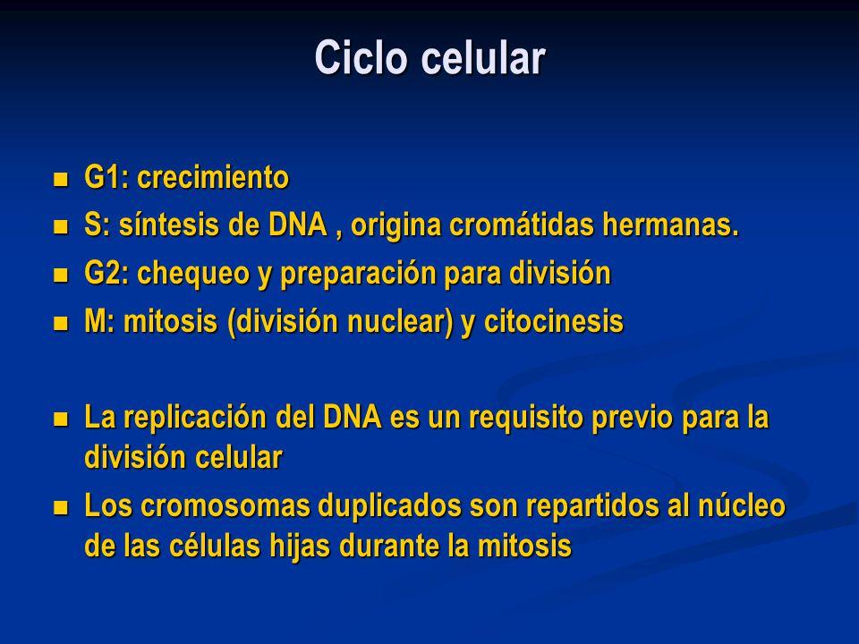 Ciclo celular G1: crecimiento