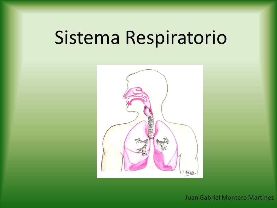 Sistema Respiratorio Juan Gabriel Montero Martínez