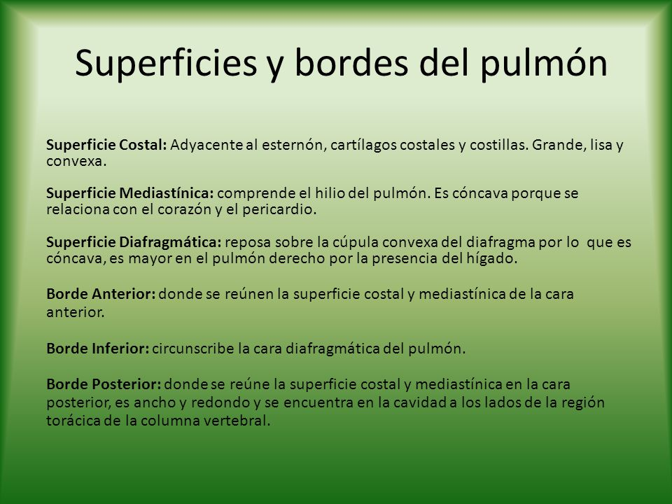 Superficies y bordes del pulmón