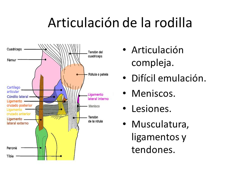 Articulación de la rodilla