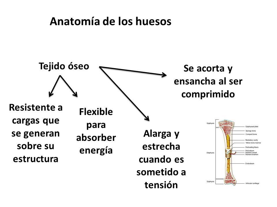 Anatomía de los huesos Tejido óseo