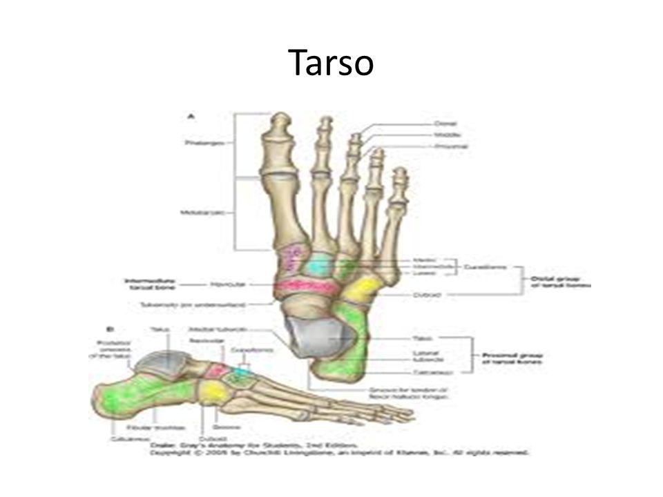 Tarso